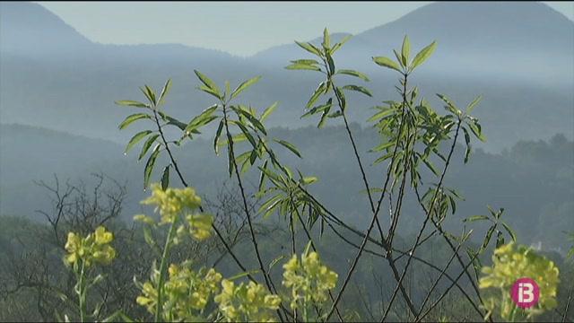 A+Eivissa+es+plantaran+500+ametllers+de+cultiu+ecol%C3%B2gic+aquest+hivern