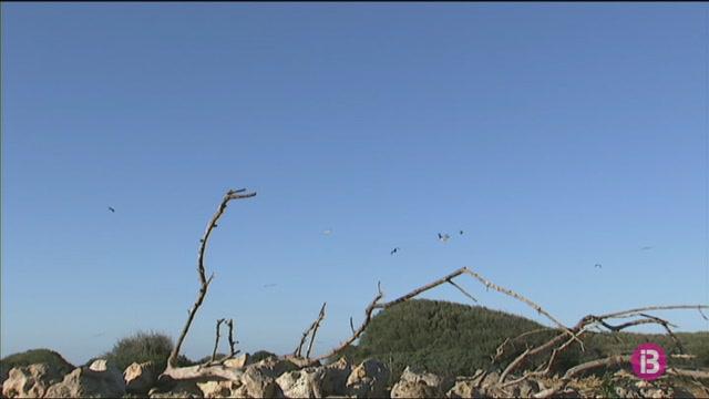 El+canvi+clim%C3%A0tic+encara+no+ha+afectat+la+flora+i+la+fauna+de+Menorca