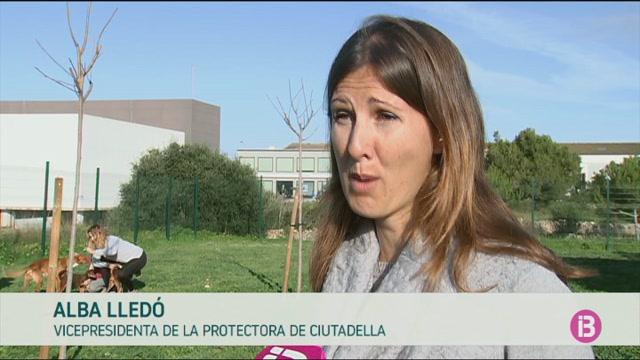 Les+protectores+de+Menorca+alerten+del+risc+de+comprar+mascotes+online