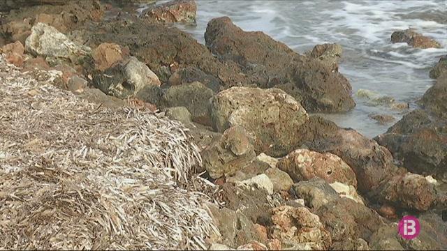La+din%C3%A0mica+de+les+platges+a+Menorca