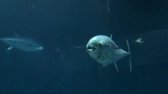 El+model+de+pesca+sostenible%2C+a+debat+a+Palma