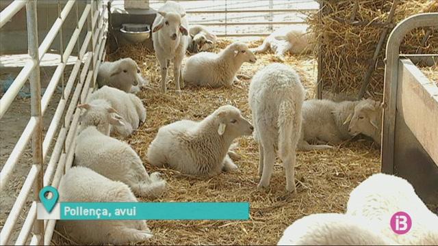 Set+a+foravila%3A+les+pastures+no+basten+per+alimentar+les+ovelles