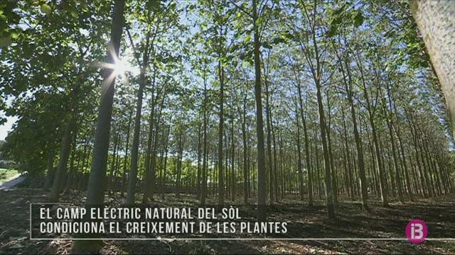 El+camp+el%C3%A8ctric+natural+del+s%C3%B2l+condiciona+el+creixement+de+les+plantes