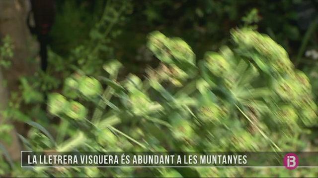 Coneixem+la+lletrera+visquera