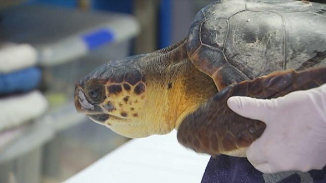 Lluita+a+la+mar+contra+les+xarxes+de+pesca+i+palangres+abandonats+que+perjudiquen+els+animals
