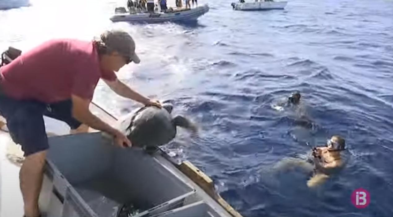 Alliberen+dues+tortugues+marines+que+van+arribar+ferides+a+la+costa+de+Ciutadella+fa+dos+mesos