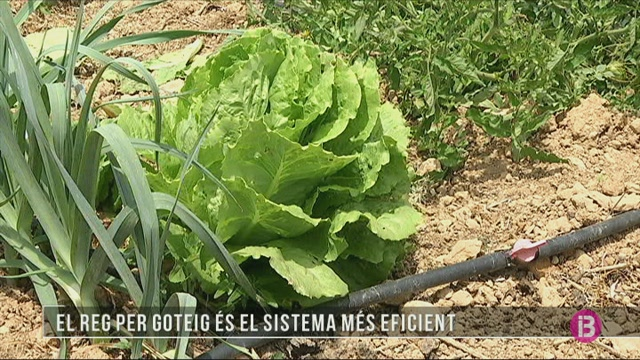 Regar+l%27hort+per+goteig+%C3%A9s+el+sistema+m%C3%A9s+eficient