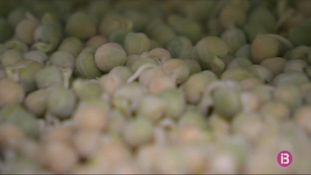 Una+plantaci%C3%B3+de+germinats+que+evita+els+fertilitzants+a+la+terra