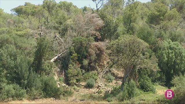El+arbres+del+cap+de+fibl%C3%B3+sense+recollir+agreugen+el+risc+d%27incendi