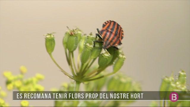 El+paper+dels+insectes+en+el+nostre+hort