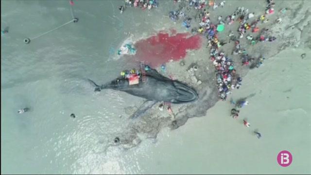 Dues+balenes+moren+encallades+a+les+platges+del+Brasil+en+menys+de+24h
