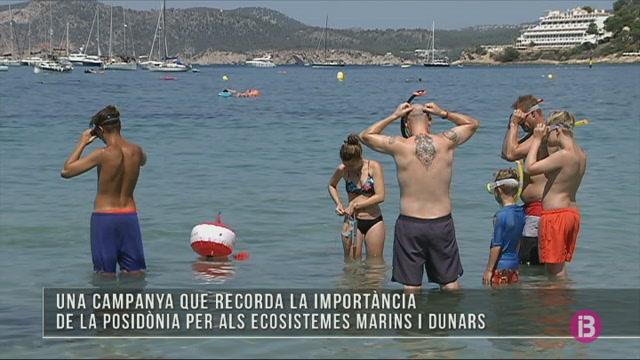 GOB+Mallorca+consciencia+sobre+la+posid%C3%B2nia+a+quatre+platges+de+l%27illa