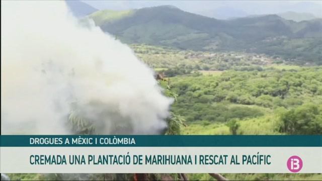 Militars+mexicans+cremen+una+plantaci%C3%B3+de+marihuana+a+l%27estat+de+Sinaloa