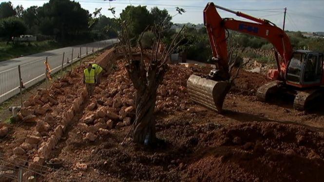 Mallorca+ultima+un+espai+d%26apos%3Bhomenatge+als+presos+que+construiren+carreteres+al+franquisme