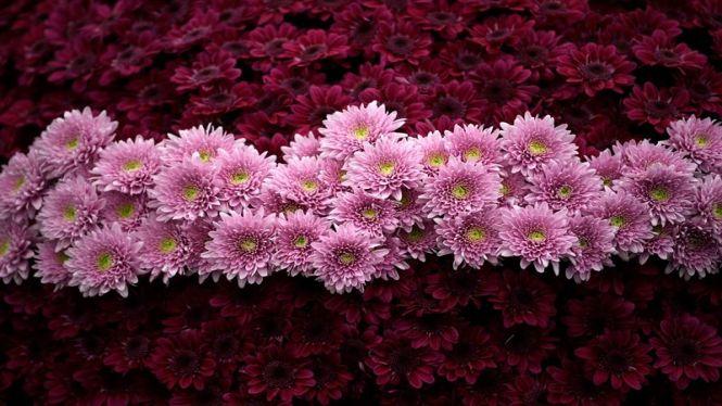 El+negoci+de+les+flors+als+cementiris%3A+estranys%2C+gladiols+i+clavells