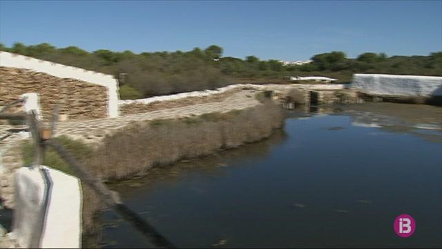 El+darrer+estudi+elaborat+a+Menorca+xifra+en+180.000+el+nombre+d%27anguiles+a+l%27Albufera+des+Grau