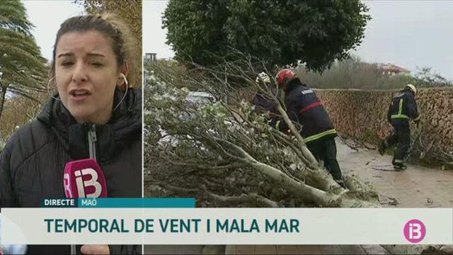 Ports+tancats+i+molts+arbres+caiguts+a+Menorca+pel+temporal+de+vent+i+pluja