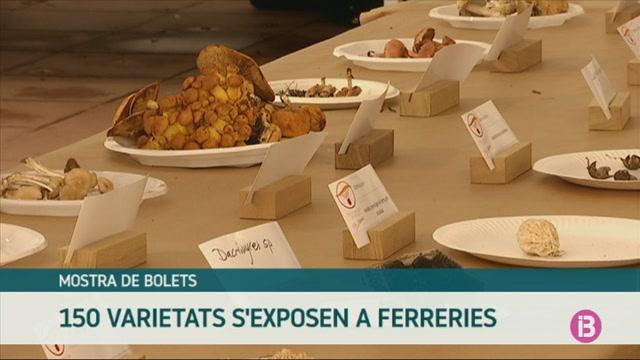 El+cercle+micol%C3%B2gic+de+Menoca+exposa+150+varietats+de+bolets+a+Ferreries