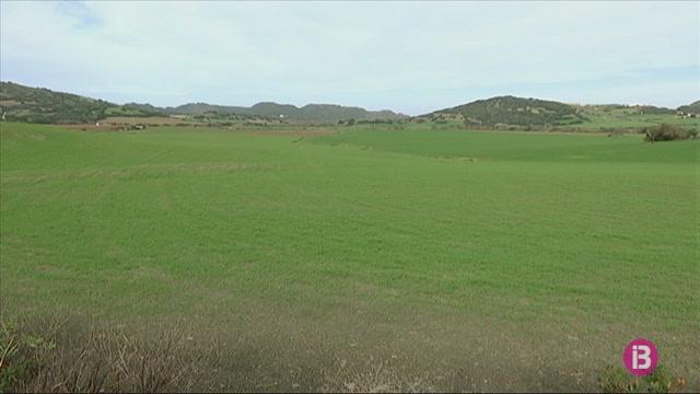 El+GOB+Menorca+denuncia+la+destrucci%C3%B3+de+dos+quil%C3%B2metres+de+paret+seca+a+una+finca+des+Mercadal