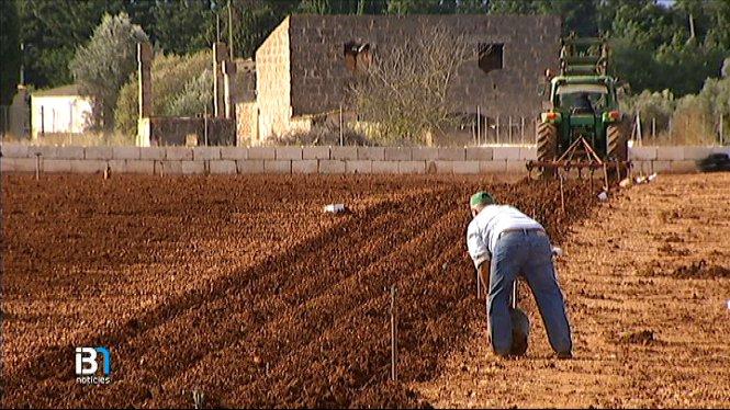 El+Butllet%C3%AD+Oficial+de+l%27Estat+publica+reduccions+als+m%C3%B2duls+de+l%27IRPF+per+als+agricultors+i+els+ramaders+de+les+Balears
