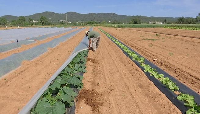 Els+pagesos+d%27Eivissa+pronostiquen+un+gran+any+pel+camp+gr%C3%A0cies+a+les+pluges