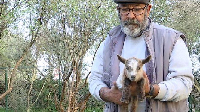 Adopten+la+meitat+de+les+cabres+silvestres+de+s%27Algar