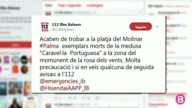 Apareixen+restes+de+caravel%C2%B7la+portuguesa+a+la+platja+des+Molinar