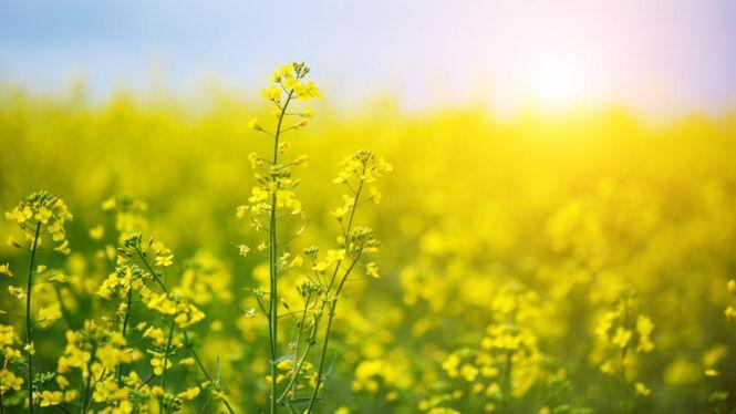 La+primavera+d%27enguany%3A+tres+llunes+plenes%2C+dues+pluges+d%27estels+i+quatre+planetes+a+prop