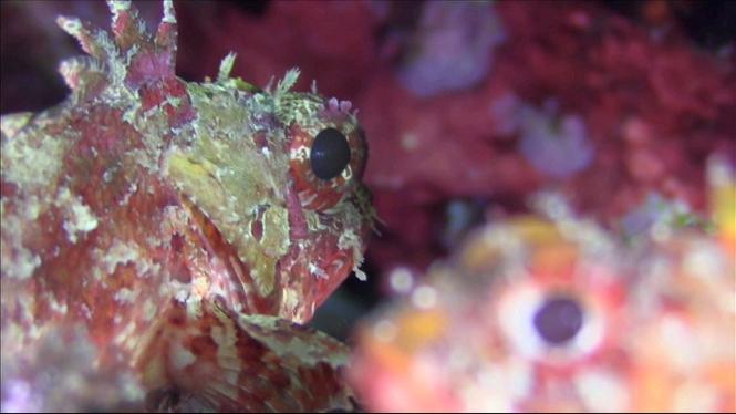 Medi+Ambient+vol+estudiar+els+peixos+vulnerables+a+les+reserves+marines