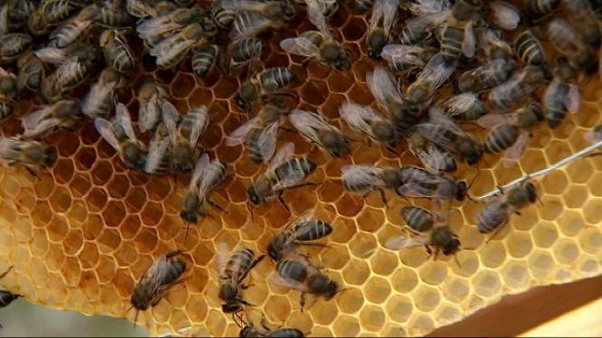 Una+mel+ecol%C3%B2gica+mallorquina%2C+reconeguda+a+un+concurs+internacional