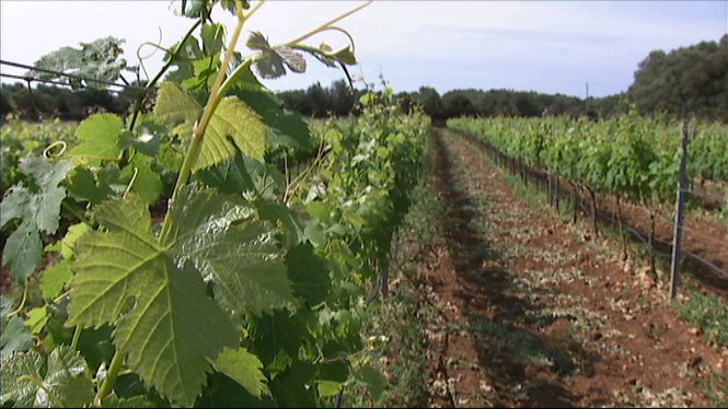 Els+vins+de+Menorca+de+cada+vegada+tenen+m%C3%A9s+pres%C3%A8ncia+al+mercat