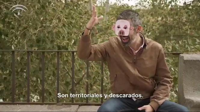 Andalusia+llan%C3%A7a+una+campanya+comparant+comportaments+masclistes+amb+animals