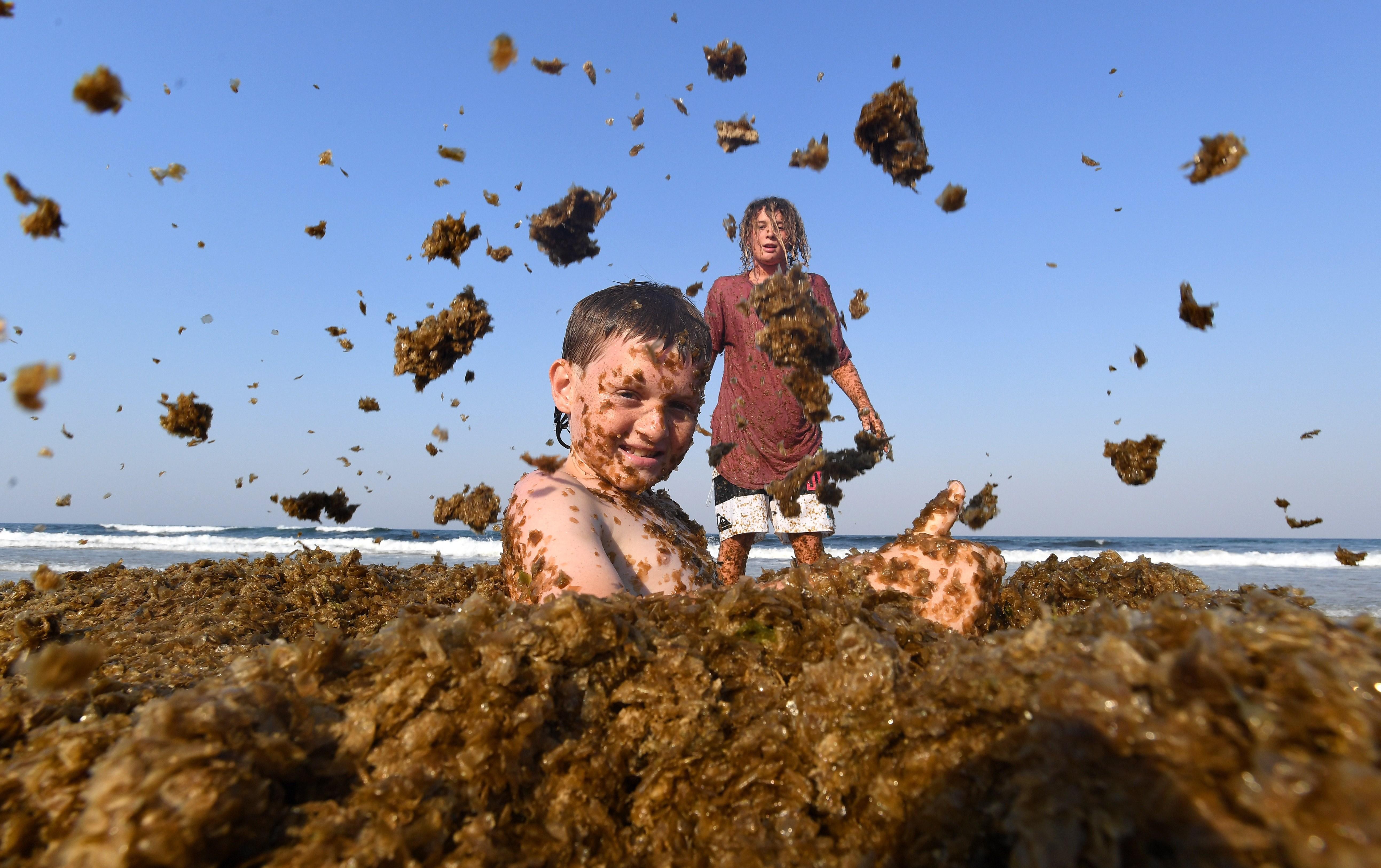 Infants juguen amb muntanyes d'alga a Queensland Austràlia. / EFE